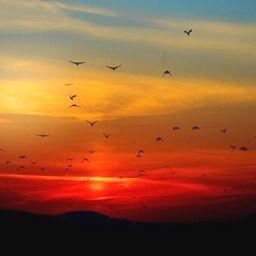 Sunset or Sunrise Bird watching